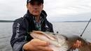 ЩУКА на ПОРОЛОН. В поисках активной рыбы. Спиннинговая ловля.