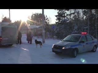 Сотрудники ДПС спасли пассажиров автобуса, сломавшегося на трассе в Челябинской области в лютый мороз