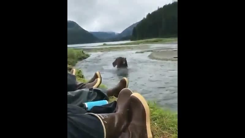 Это Аляска детка