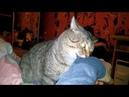 Кот кусается Кот атакует руку Весеннее обострение