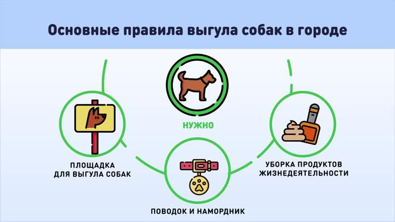 Основные правила выгула собак в городе