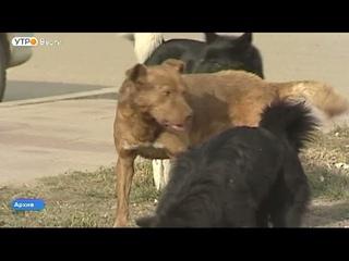 Бездомных животных хотят пересчитать в Иркутской области