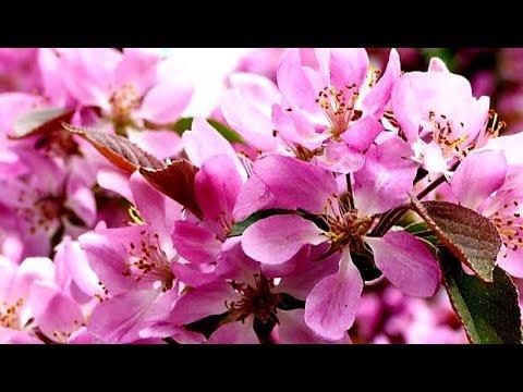 ДЫХАНИЕ ВЕСНЫ Для Души 300 минут Цветение Весны Красивая Природа