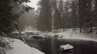 Снегопад в зимнем лесу  [🎧 4К] Река Рощинка, Линдуловская роща