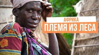 Гориллы выгнали дикое племя из леса в Африке. Уганда