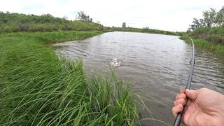 Огромное количество щуки в этом болоте. Ставлю рекорды по ловле рыбы!!!