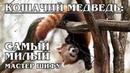КРАСНАЯ ПАНДА: Королева милоты и воин кунг-фу | Интересные факты о пандах