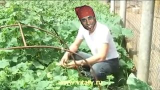 Доктор Попов - Сила земли (right version♂) Gachi Remix