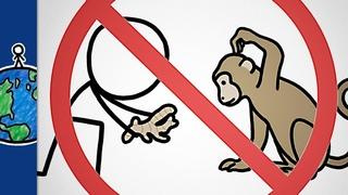 Почему не стоит давать имбирь обезьянам?