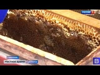 Как делается правильный мед? Репортаж с пчелиной пасеки