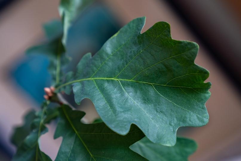 Дерево памяти, изображение №1