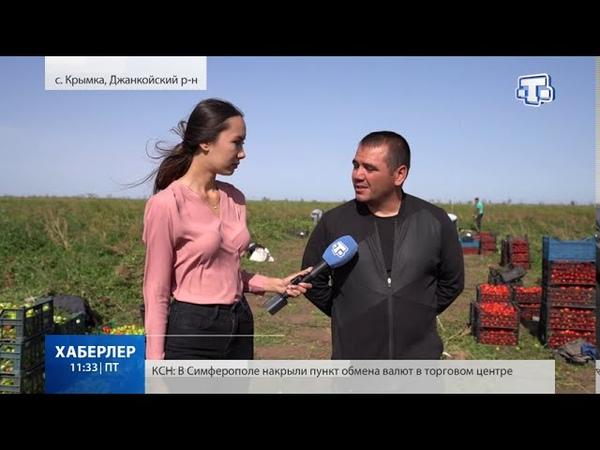 Почти 11 тысяч тонн овощей собрали крымские аграрии