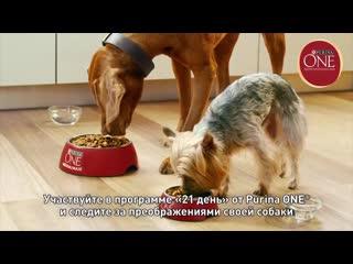 Purina_one_dog_6 v6 pre