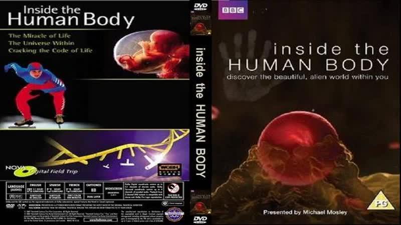 Внутри человеческого тела 04 серия Inside the human body 2011 HD 720р Перевод ДиоНиК