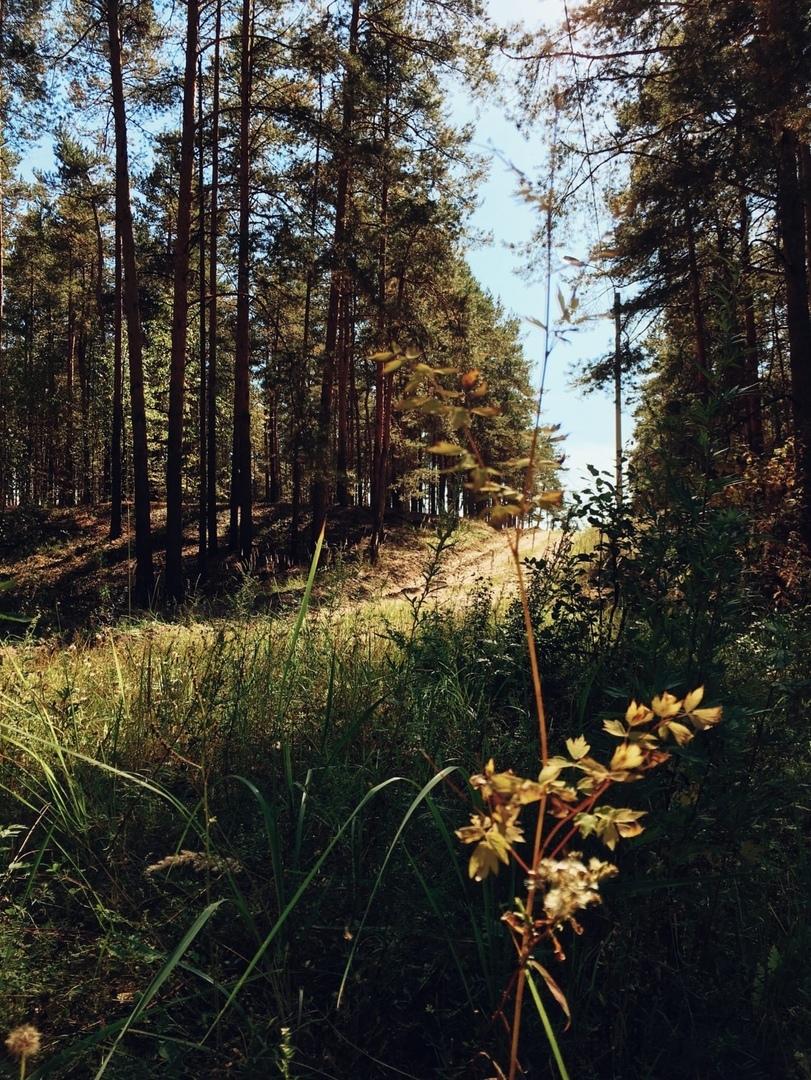 Афиша Нижний Новгород Субботник за сохранение лыжных трасс Дубравной