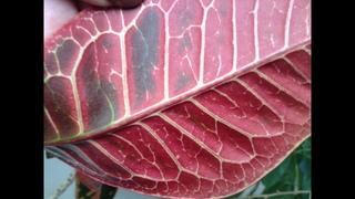 Паутинистый клещ на комнатных растениях и как лечить