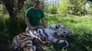 САЛОН КРАСОТЫ для амурской тигрицы Такое вы нигде не увидите Тайган Крым