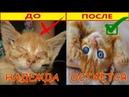Лечим Больные Глаза у Брошенных Котят. Выхаживаем Бездомных Котят. Подобрал Котенка.