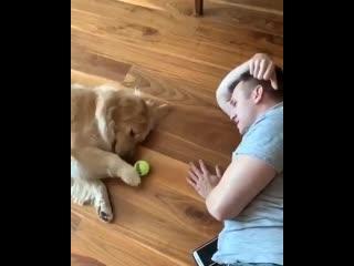 Пёс с хозяином лениво катают мячик