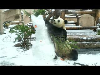 Молодой снеговик в лапах безжалостной панды