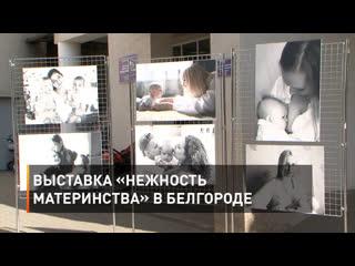 Выставка «Нежность материнства» в Белгороде