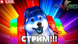 СТРИМ С ГОВОРЯЩИМ ПЁСИКОМ/КЕЙСЫ/МОНТАЖ/CS:GO/ПИАР/МУЗЫКА/ ТОП СТРИМ🔴