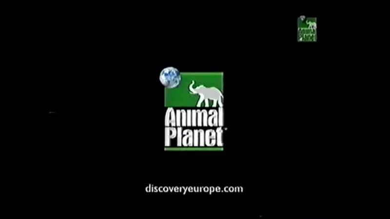 Мини-заставка канала Animal Planet 2000-2004 г. {3}