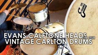 Evans Calftone Heads On Vintage Drums: In-Depth Sound Test!