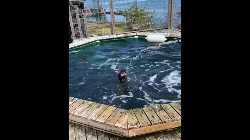 Тюлень водохлёб.mp4