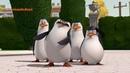 Мультфильм Пингвины из Мадагаскара - 3 сезон 1 серия HD