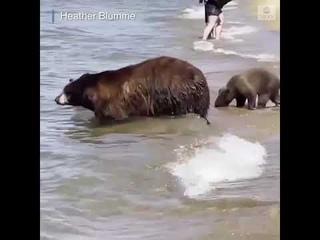 Bear family beats the heat at Lake Tahoe