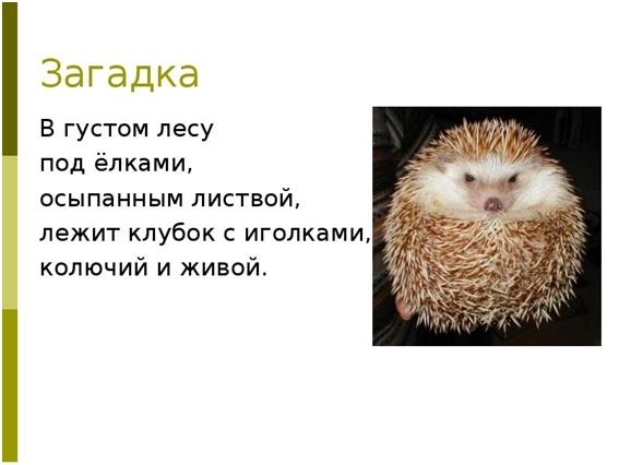«Колючие наши друзья»: познавательный час, изображение №1