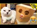 Смешные кошки приколы про кошек и котов 2018 112 Кошки до слез