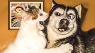ПРИКОЛЫ С ЖИВОТНЫМИ 😺🐶 Смешные Животные Собаки Смешные Коты Приколы с котами Забавные Животные #2
