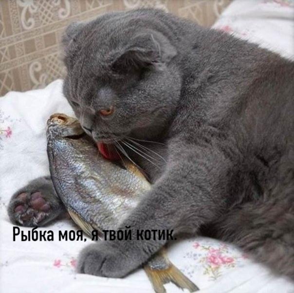 Без кота и жизнь не та :)