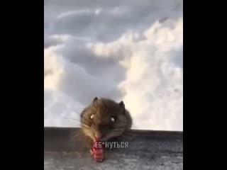 Погода в Якутии