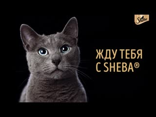 Vk_sheba_bring_home_birthday_test_general