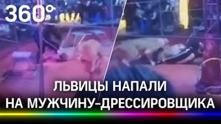 Львицы напали на мужчину-дрессировщика в Мошково - он помешал их нежным играм друг с другом