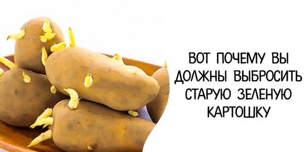 Если вы оставляете картофель в своей кладовой в...