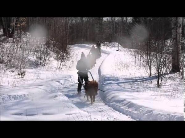 Mars 2015 Pony Joering Horse Sledding Ski Galop