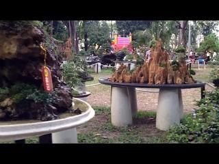 Vietnam Penjing 2017 part 2