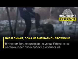(18+) В Нижнем Тагиле живодёр на улице Пархоменко жестоко избил свою собаку, выгуливая её
