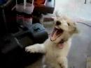 Собака и гелий Я плакала xD