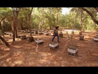 Пчелы убийцы Attack of the Killer Bees 2006
