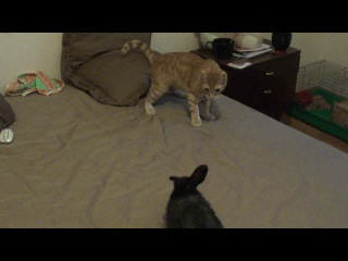 Бои без правил!)) (КотЭ vs. Кролик)