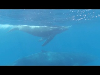 Секрет острова Мако 1 сезон 24 серия Русалки Мако Mako Mermaids 2012
