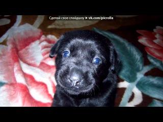 My best freind, my love DOG под музыку Детские песни - Человек собаке друг. Picrolla