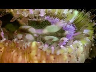 Девять месяцев из жизни кораллов за 3 минуты