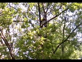 Спас воронёнка получил в загривок 04 06 2014г