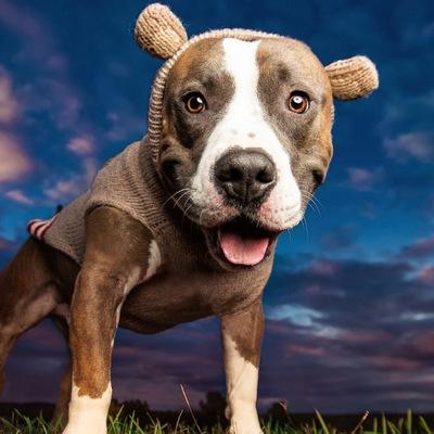 Шампунь Низорал для собак: инструкция по применению, цена